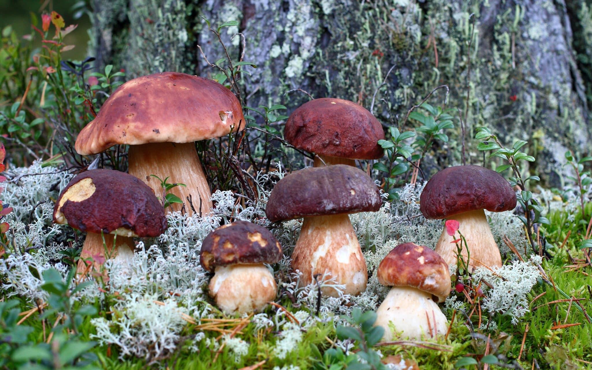 фото грибов с названиями июльский сбор факт