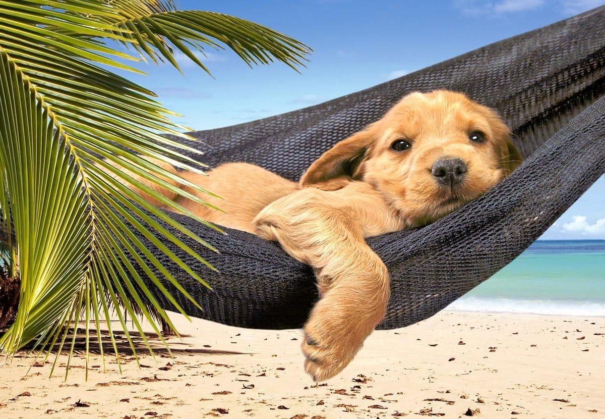 смешные картинки про лето отпуск