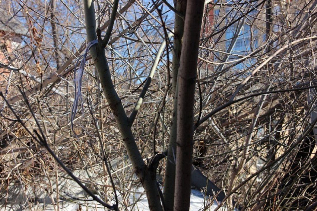 Труп мужчины на дереве обнаружили в Санкт-Петербурге