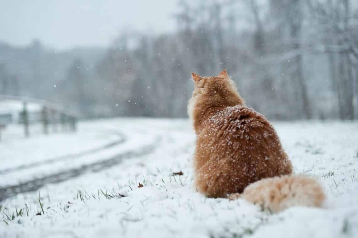 Картинки зимний санкт петербург