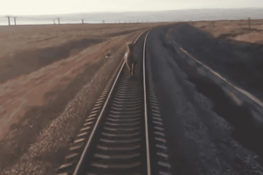Верблюд задержал поезд Ташкент-Москва на 44 минуты