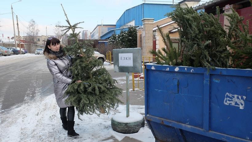 Где бесплатно можно сдать новогоднюю елку: пункты утилизации елок в Москве в 2020 году