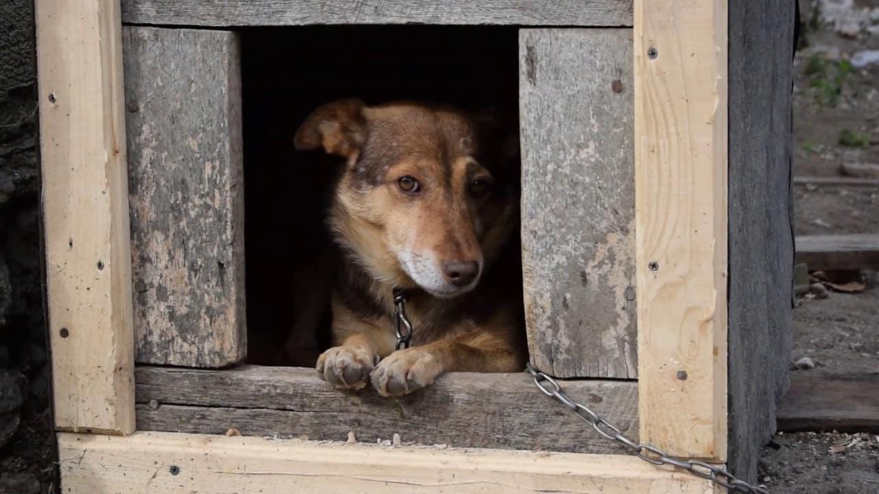 Дело о краже миллиона рублей из собачьей будки
