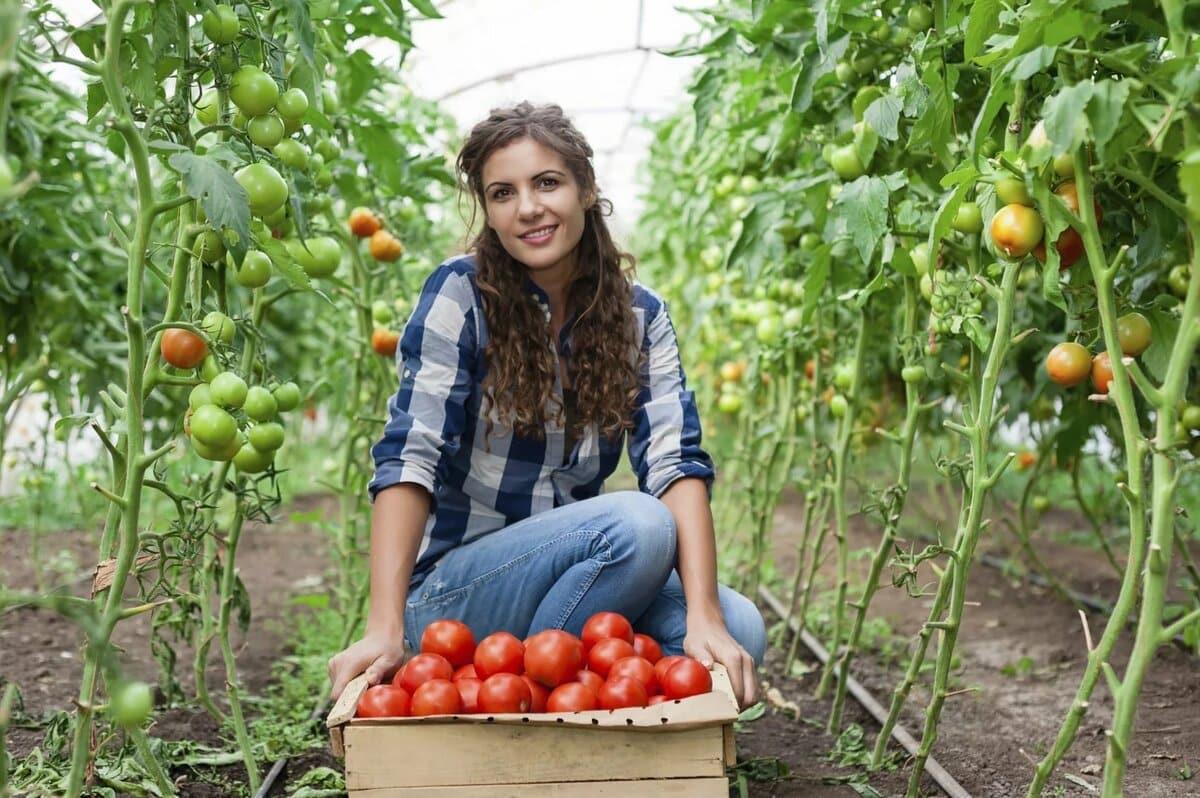 Когда сажать томаты и перец на рассаду в 2020 году