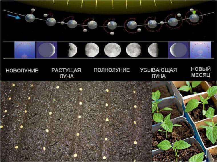 Рассадная посевная: расписание для перца по Луне на 2020