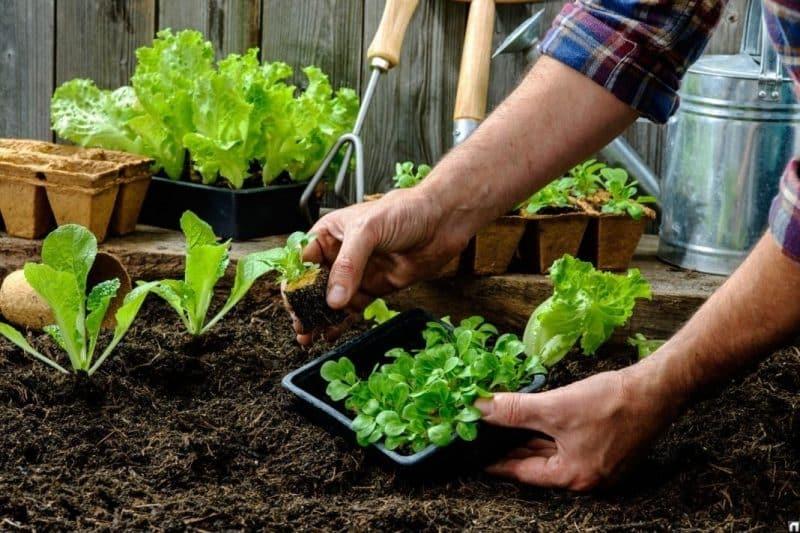 Благоприятные дни для садовода на февраль 2020 по лунному календарю