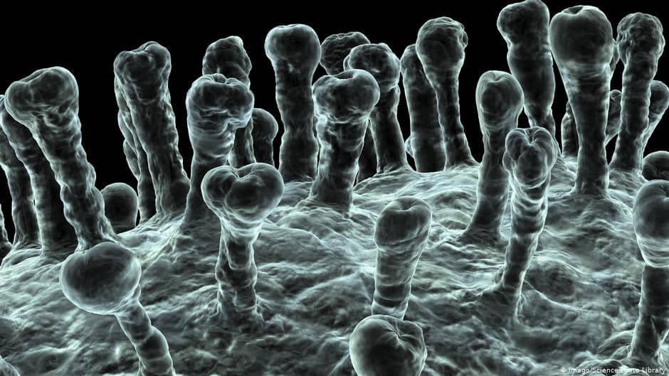 Стало известно когда появится вакцина от коронавируса: свежие данные о новом вирусе