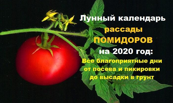 График посева перца, баклажанов, помидор на 2020 год