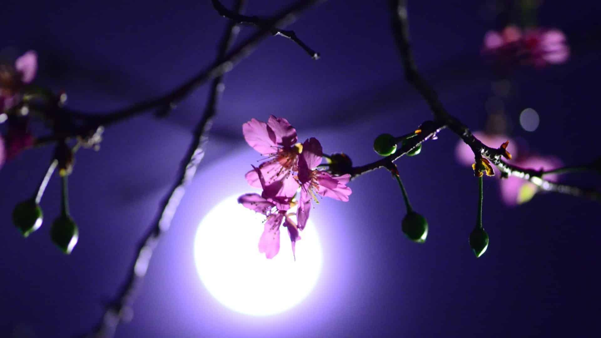 Когда сажать рассаду в марте 2020: лунный календарь огородника по знакам Зодиака