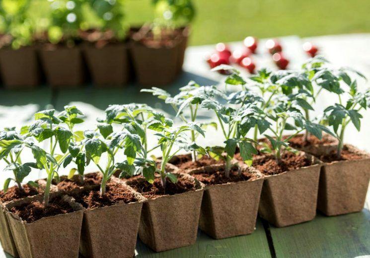 Благоприятные дни для посева помидор и перцана рассаду в 2020 году, по лунному календарю