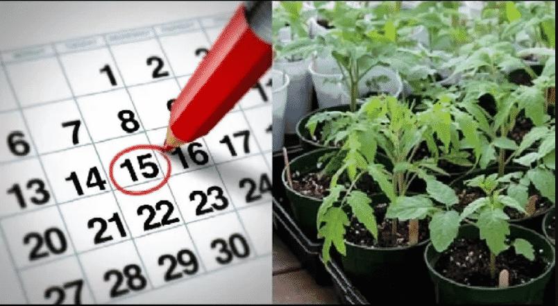 Хороший урожай начинается с рассады. Когда посеять семена по лунному календарю?