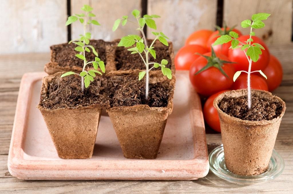 Подходящие дни в марте 2020, чтобы посадить на рассаду томат с перцем