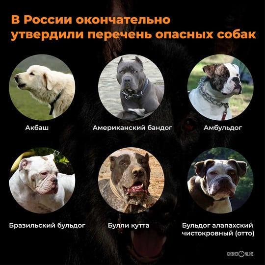Официальный список законодательно запрещенных собачьих пород возможно, требует доработки
