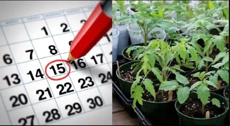 Календарь мартовских посевов в 2020, подходящие дни по лунному циклу