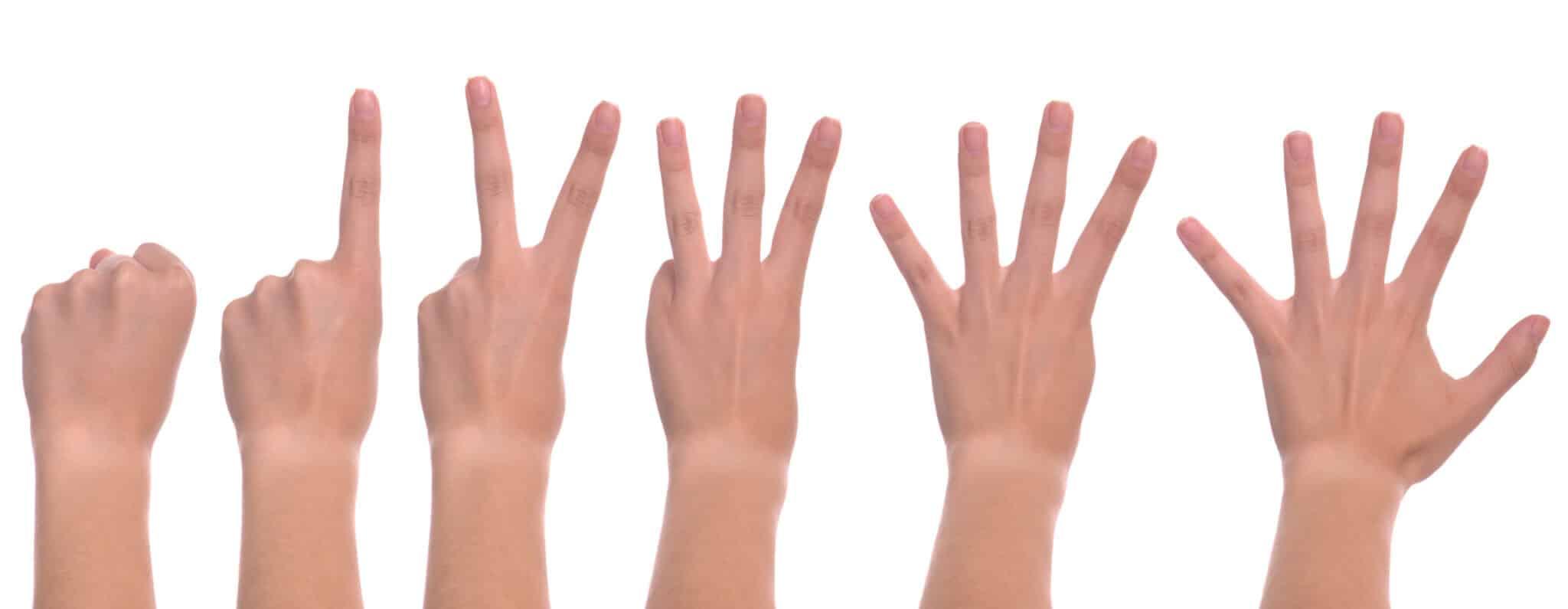 Почему у человека пять пальцев на руках и ногах