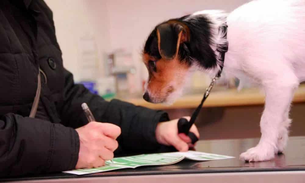 Принятие налога на собак отклонено в Госдуме