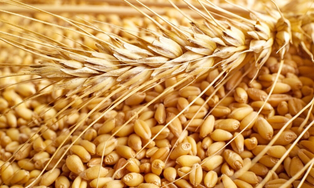 Цена на пшеницу падает, цена на кукурузу снижается, у сои всё хорошо