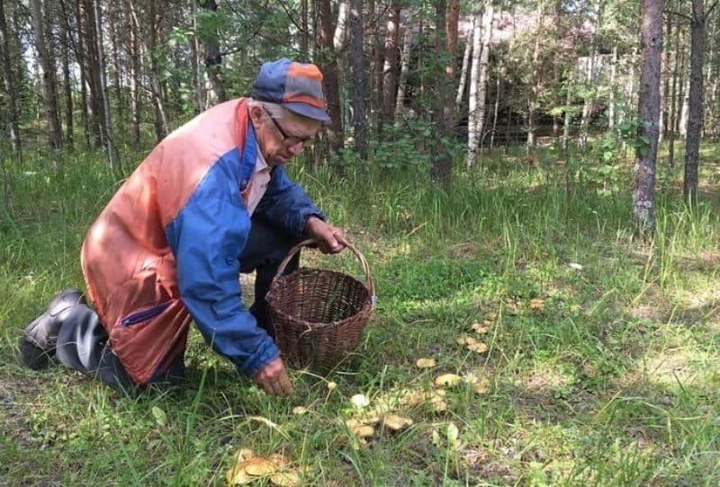 Сезон сбора грибов в Подмосковье открывается в июне 2020: какие грибы можно собирать