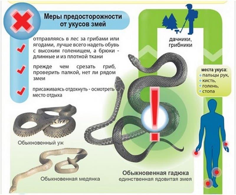 Активность змей в подмосковных лесах выросла из-за жары
