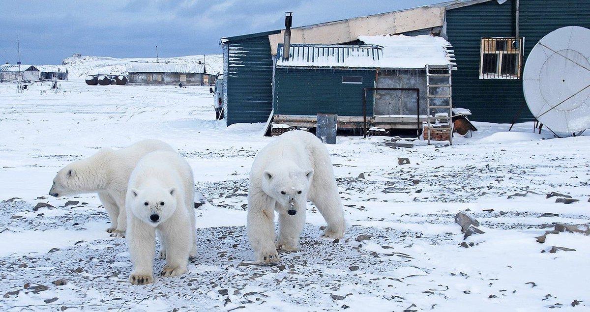 Россияне смогут получить гектар земли в Арктике: новый законопроект правительства