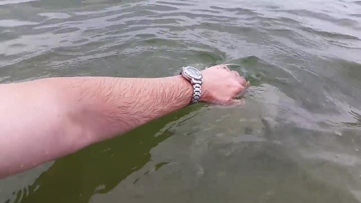 Опасные медузы, обитающие в Черном и Азовском морях. Какие из них могут навредить туристам