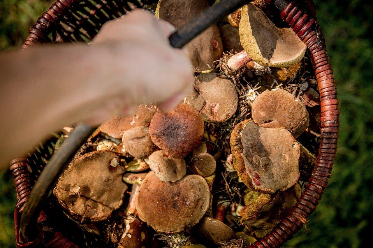 О штрафах за сбор редких грибов в России напомнили в Министерстве юстиции