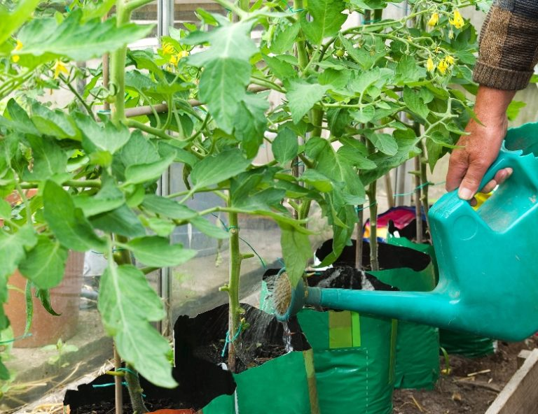 Садоводы жалуются на плохой урожай помидоров и огурцов в Подмосковье в 2020 году