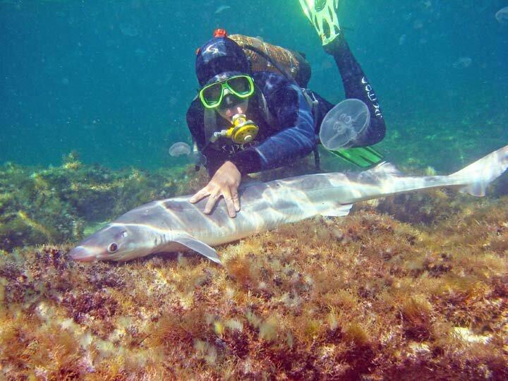 Специалисты утверждают что акул в Чёрном море можно не опасаться