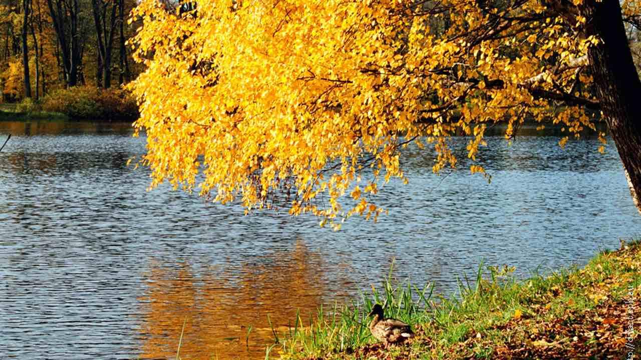 Какой будет погода в сентябре в Москве и области, рассказали в Гидрометцентре России