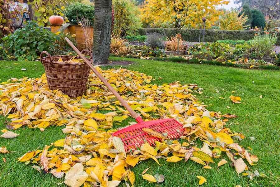 Какие работы должны выполнить дачники осенью