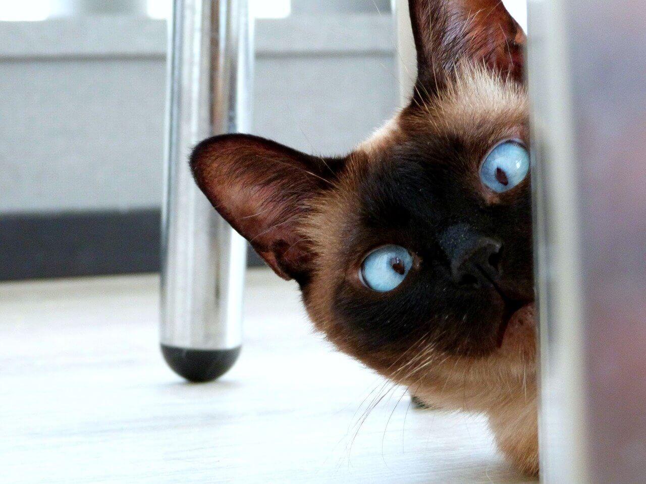 Почему кошки в России отзываются на кис-кис, как домашние так и уличные