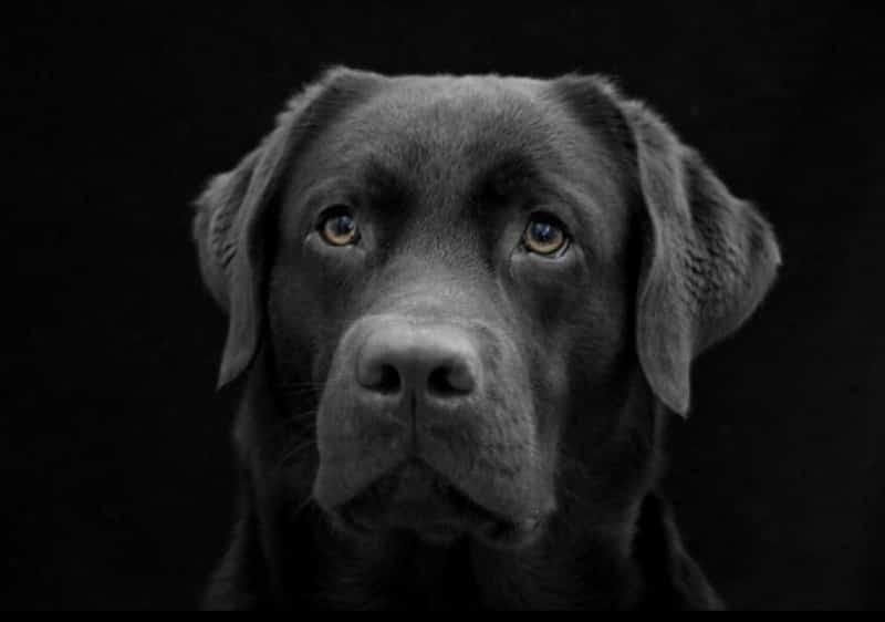 В США собаку приговорили к пожизненному сроку в тюрьме