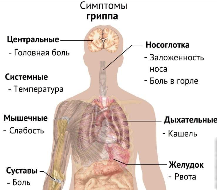 Сколько дней не рекомендуется мочить прививку от гриппа, рассказали медики