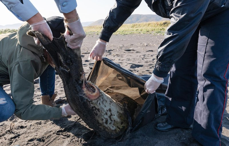 Отравлены люди, погибли животные: экологическая катастрофа на Камчатке