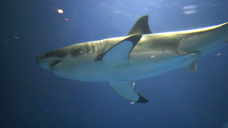 От нападения акулы в Египте пострадали украинские туристы