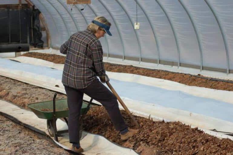 Дачные хитрости: какие удобрения нужно вносить под перекопку для томатов и огурцов в теплице