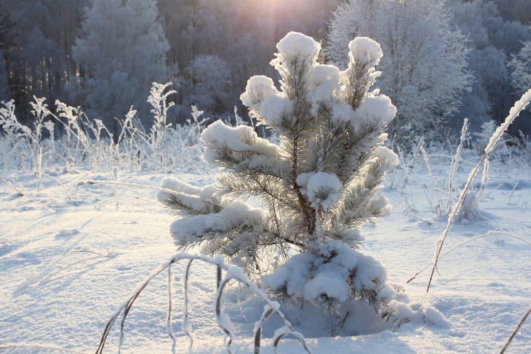 Синоптики рассказали какая зима ждет россиян в 2021 году