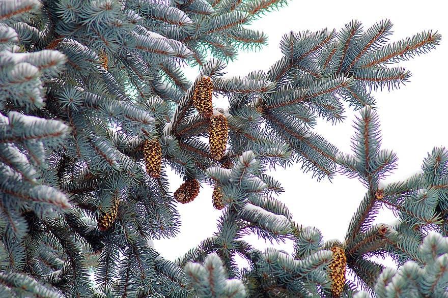 О стоимости живой ёлки и новогодних украшений в 2020 году рассказали эксперты