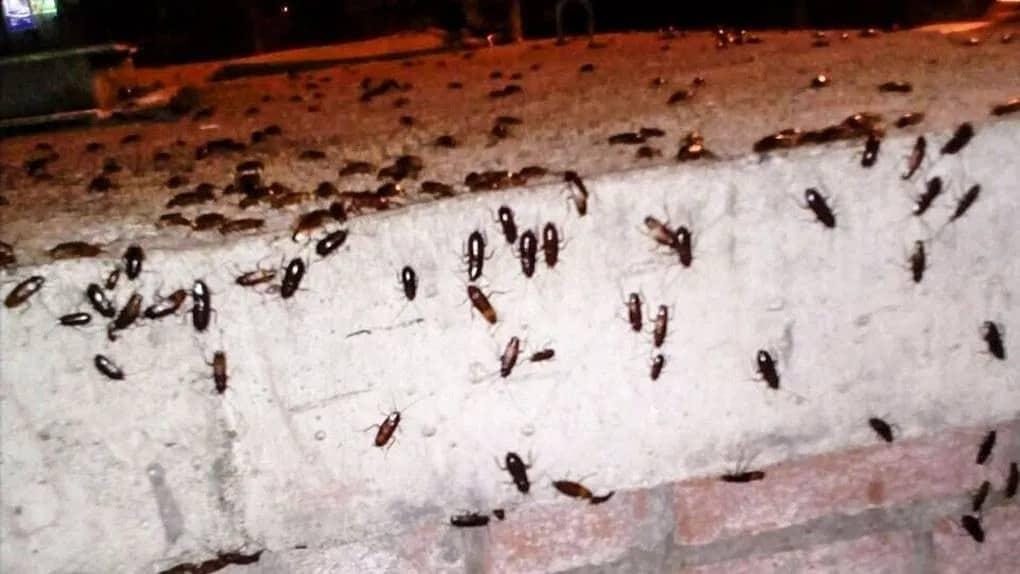 Россиян предупредили о нашествии тараканов в феврале 2021 года