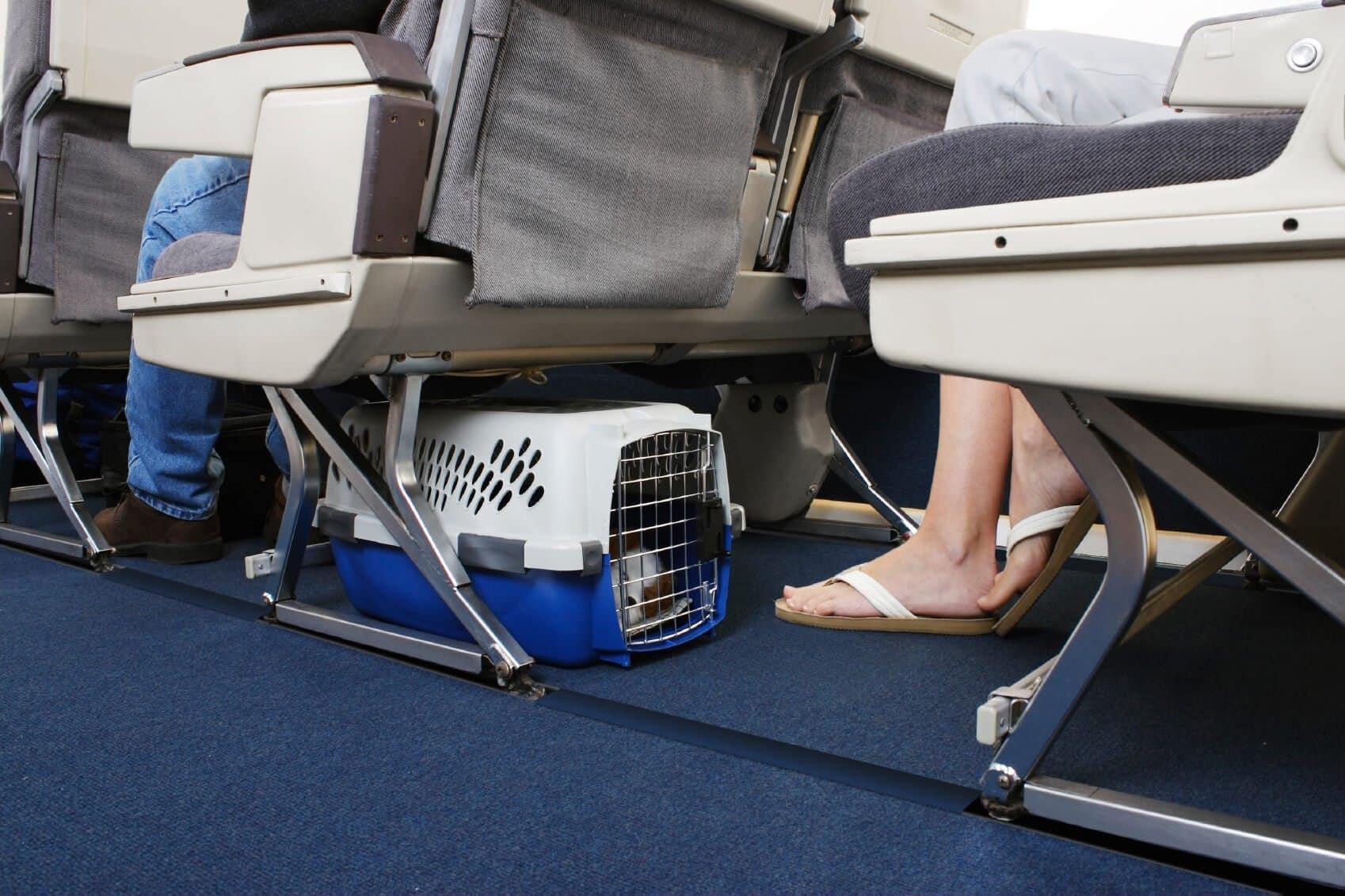 Авиакомпания S7 разрешила брать домашних животных в салон самолета