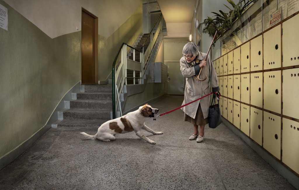 Ужесточить наказания за жестокое обращение с домашними животными могут в России