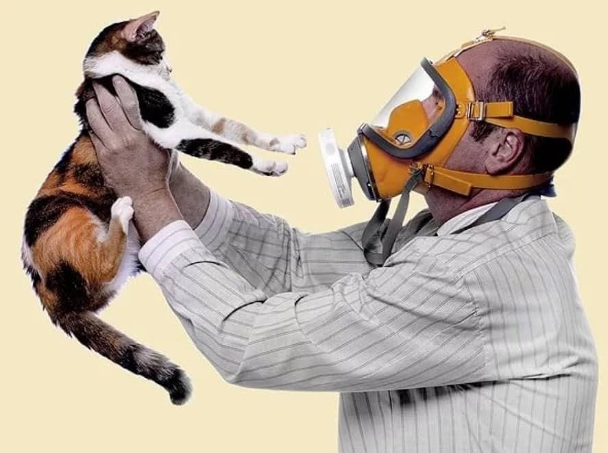 Вакцина от аллергии на кошек может появиться к 2023 году
