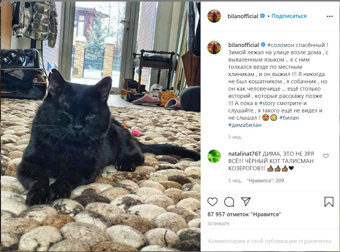 СПИД обнаружили ветеринары у кота Димы Билана